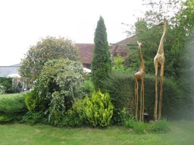 40 Giraffes By The Hedge