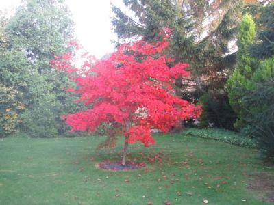 74. Autumn Colour